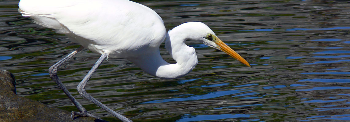 Egret Rescue GC