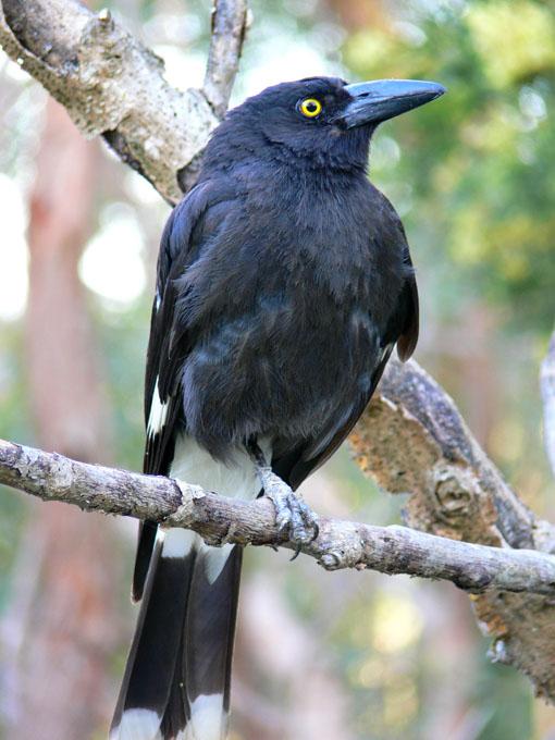 Feeding Common Garden Birds
