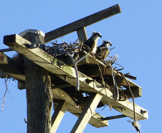 Ospreys, SPort 2